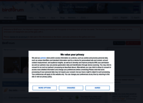 birdforum.net