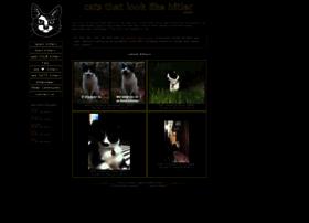 catsthatlooklikehitler.com