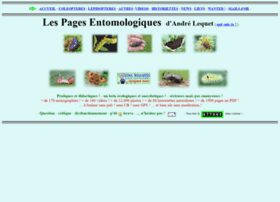 insectes-net.fr