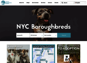 nycacc.org