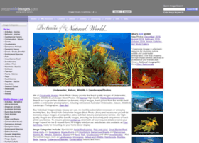 oceanwideimages.com
