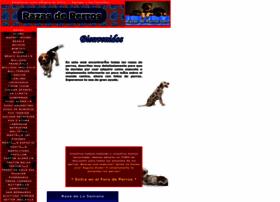 razas-de-perros.com