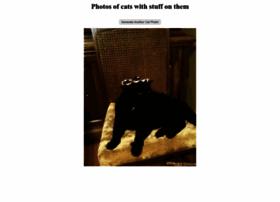 stuffonmycat.com